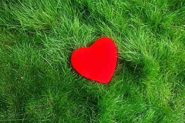 從愛開始──量子觸療的練習
