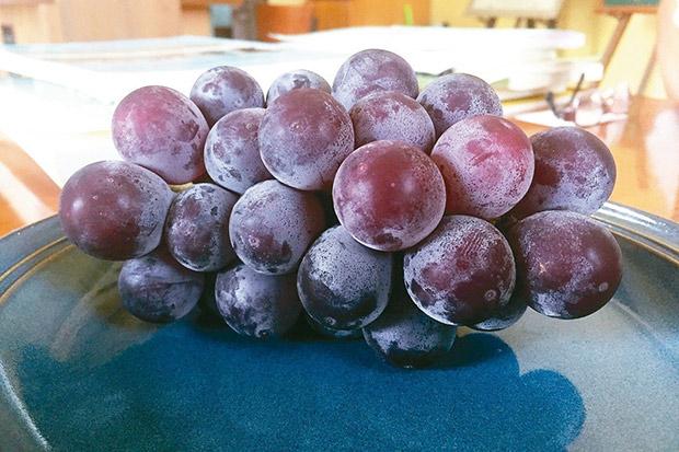 葡萄:不同產地,不一樣的風土滋味