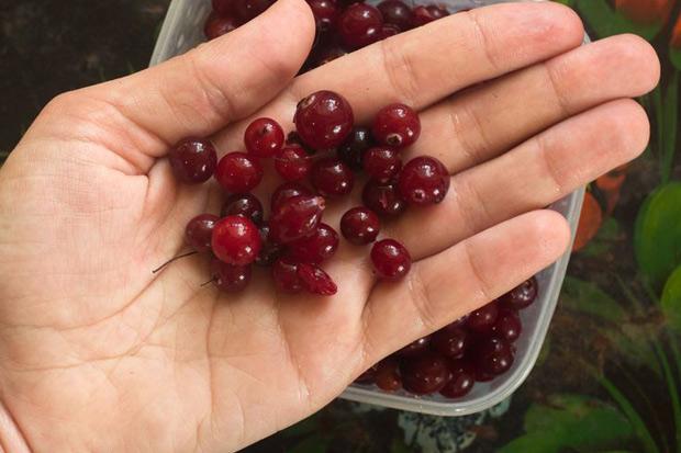 預防泌尿道感染,什麼將蔓越莓打敗了?