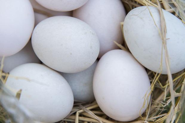 蛋蛋危機!買回來的雞蛋要用水清洗嗎?