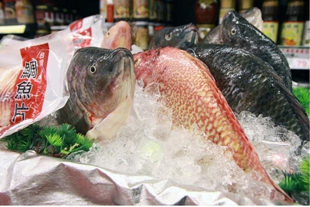 網再傳「5個原因不該吃吳郭魚」 專家這麼說