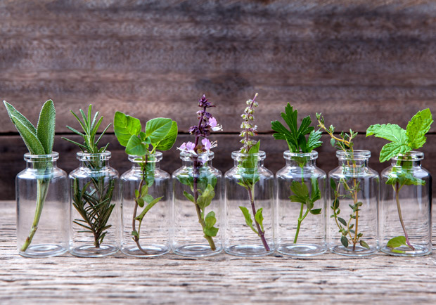 療癒你的身心靈!芳香藥草:奧勒岡、迷迭香、鼠尾草、百里香