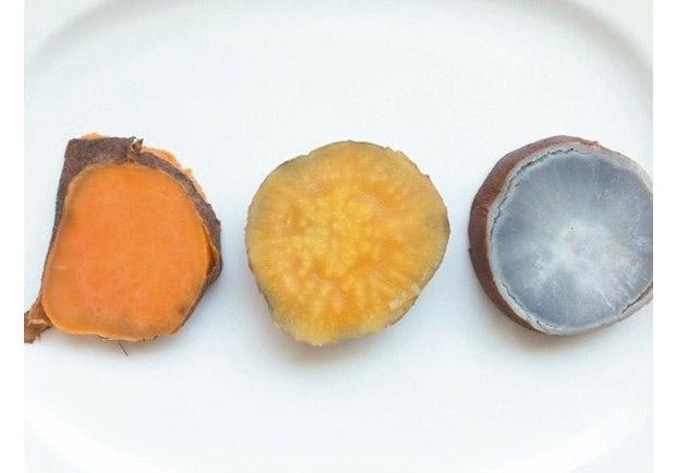 把握最美味的季節:地瓜