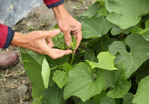 肥料會讓蔬菜變難吃?讓植物脫離惡性循環