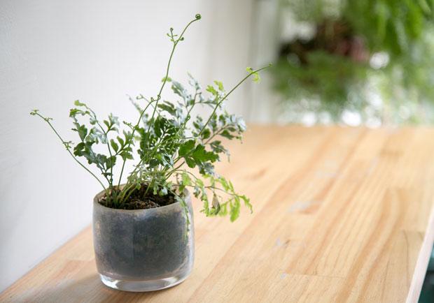 選對這些綠色植物,淨化空氣效果不輸清淨機
