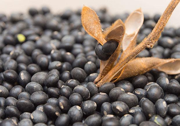 蛋白質比牛奶高12倍!消水腫又顧腎的營養食材:黑豆