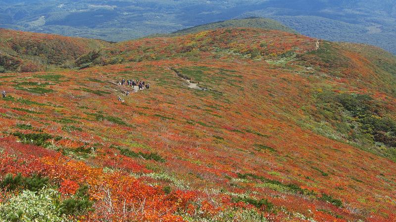 【日本賞楓】楓葉染紅山頭的栗駒山