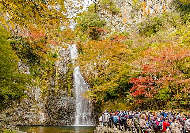 感受楓紅層層的絕美景致!到大阪「箕面瀑布」賞楓趣