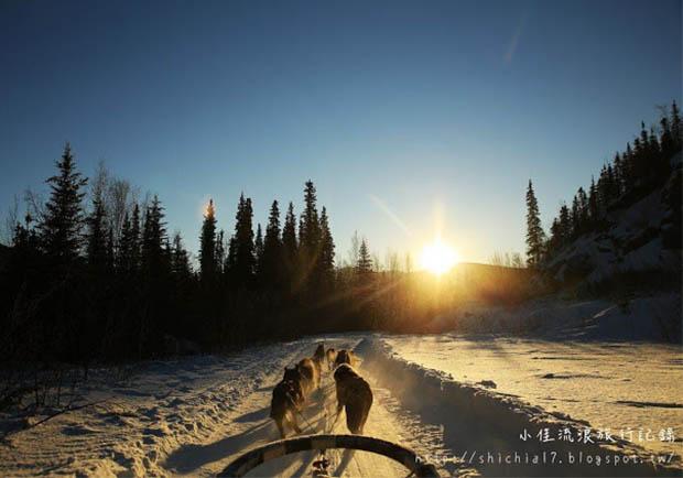 在冰天雪地的阿拉斯加,和雪橇犬一起瘋狂奔馳!