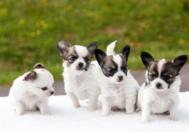 顛覆你的想像!世界上最聰明的15種動物