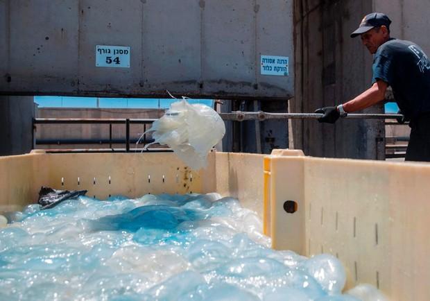 生態的逆襲?大量水母堵塞發電廠的心酸真相