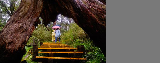 42條生態遊路線 重新玩寶島