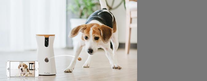【活動】上傳狗狗照片拿攝影機