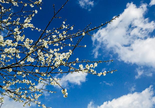 新春就是要賞花!快來感受銀白世界的美好浪漫