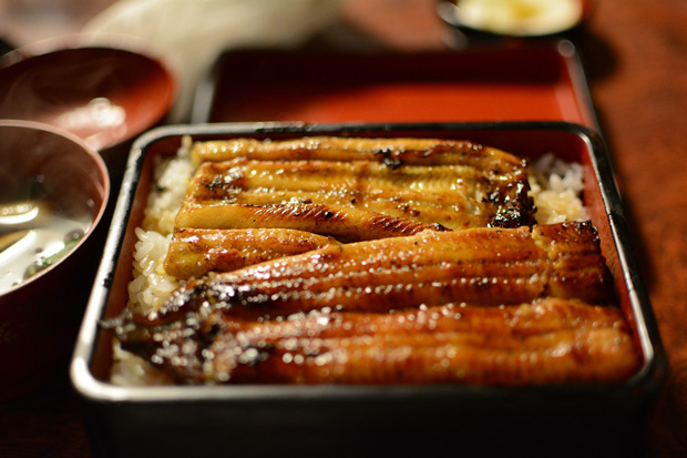 享用料理之前,先瞭解品種差異:鰻魚