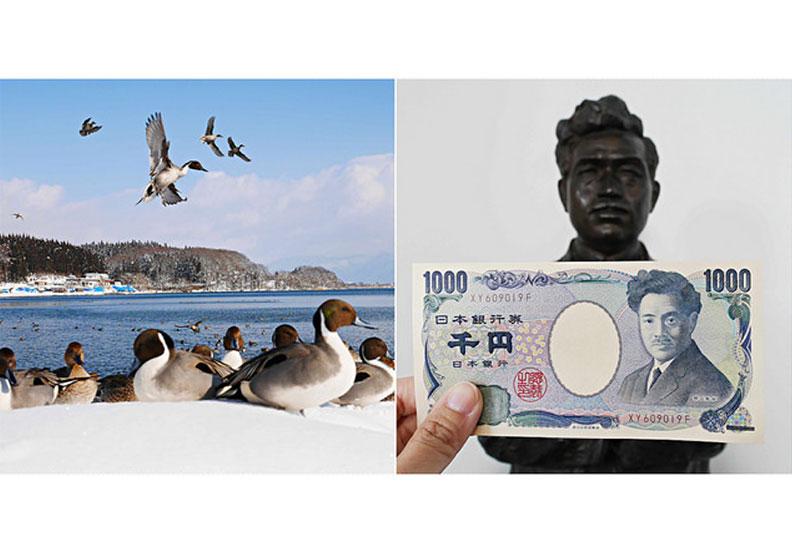 認識日幣一千元上的人:野口英世、長濱猪苗代湖餵天鵝、水鴨