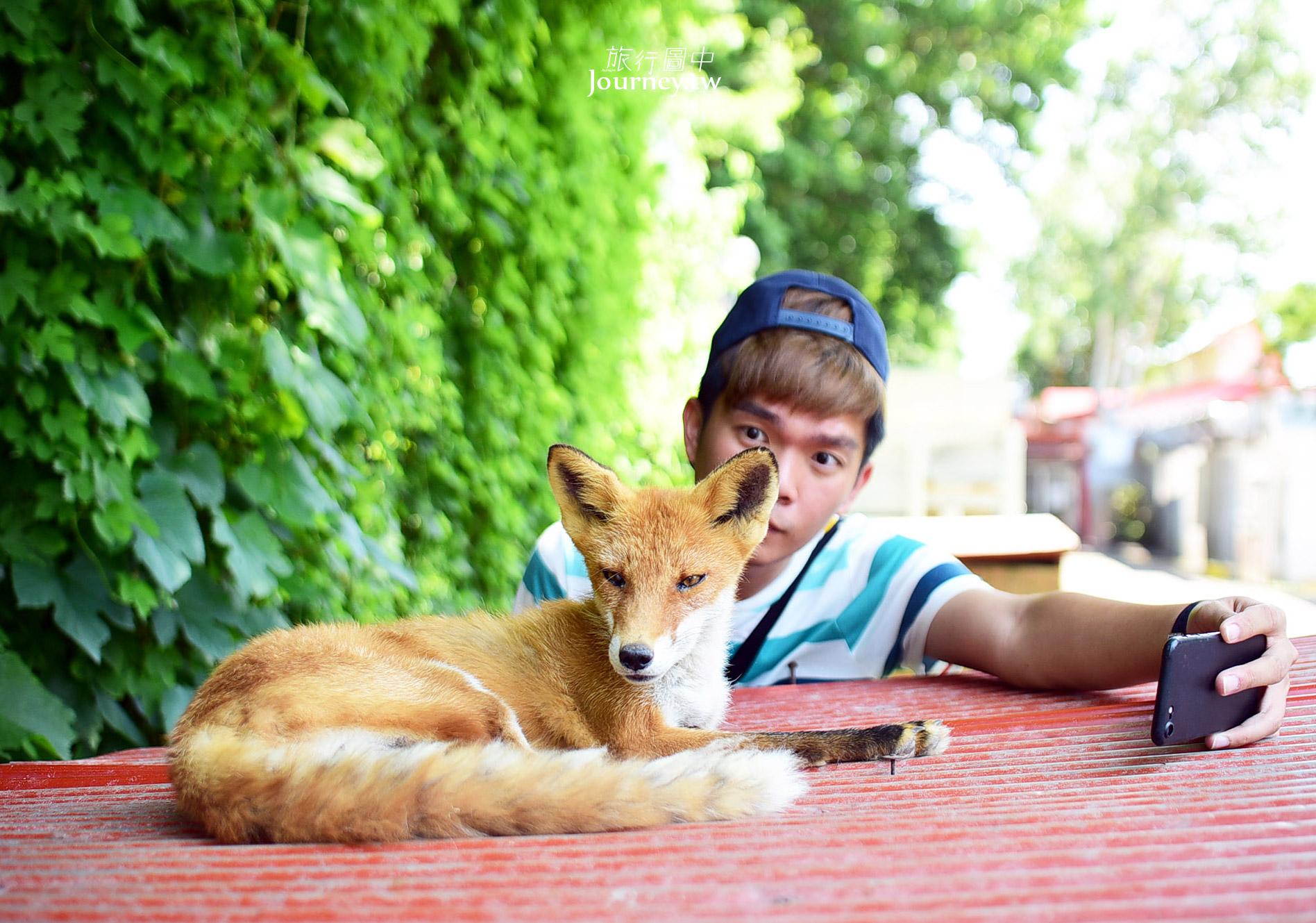 60隻狐狸的萌學園:北見狐狸牧場