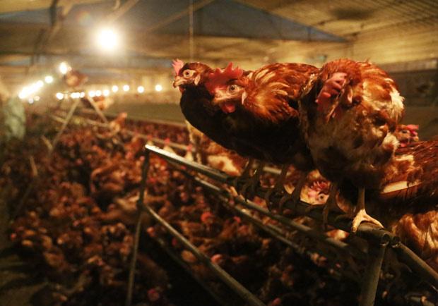 人流感比禽流感可怕!