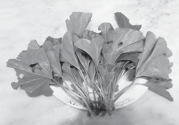 秦朝的主食與蔬菜:小米配冬莧菜