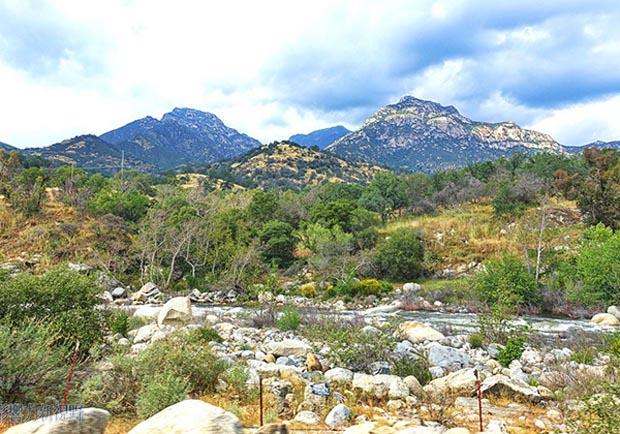 加州紅杉樹國家公園參見全世界最大的樹!