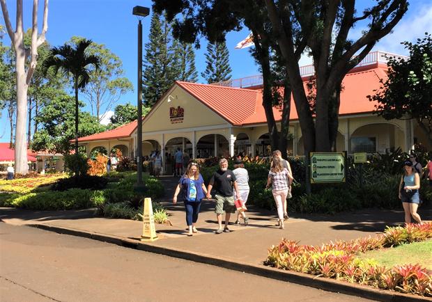 歡樂鳳梨園  跑跳夏威夷