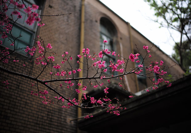 春天這麼美,美到讓人絶望 ─ 抑鬱者的黑色春季
