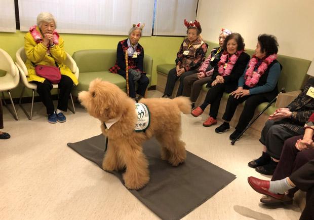 動物輔助的治療,預防延緩失智有成效
