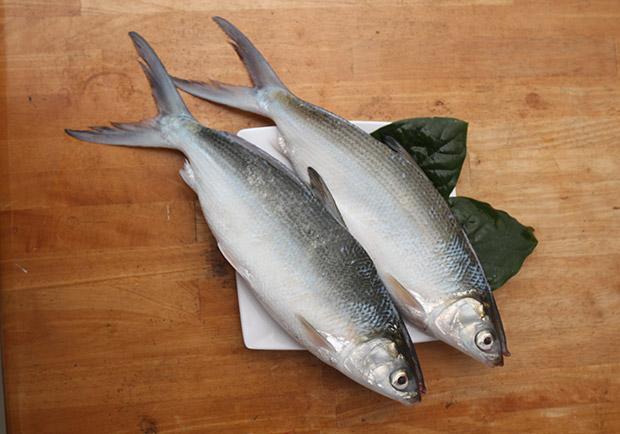 想要耳聰目明,吃魚就對了!