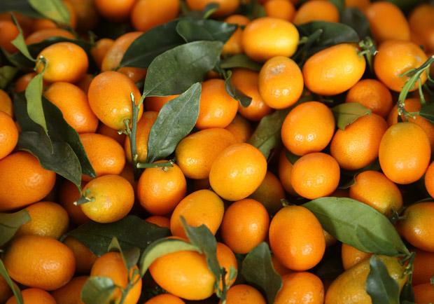 讓宜蘭人驕傲的「吃甜」:金柑