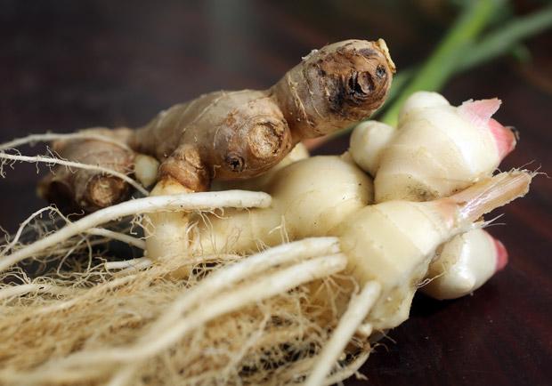 有益腸胃機能的 7 種天然物質