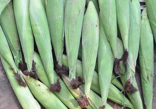 帶殼更好保存!玉米筍營養價值高,但這類人別吃太多